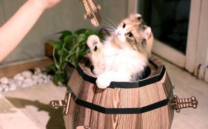 CAT BARAEL_10